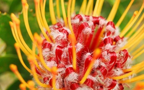 Earth Flower Flowers Macro HD Wallpaper | Background Image