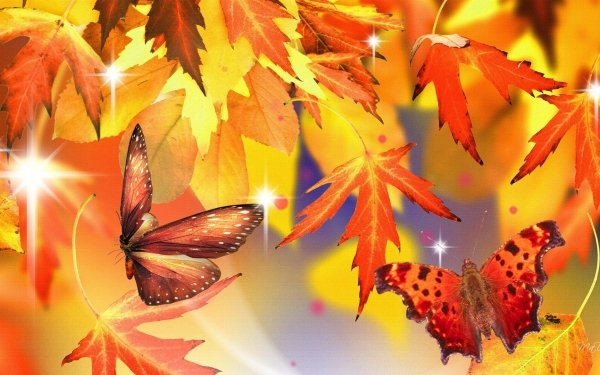 Artistic Fall Leaf Butterfly Moth HD Wallpaper | Background Image