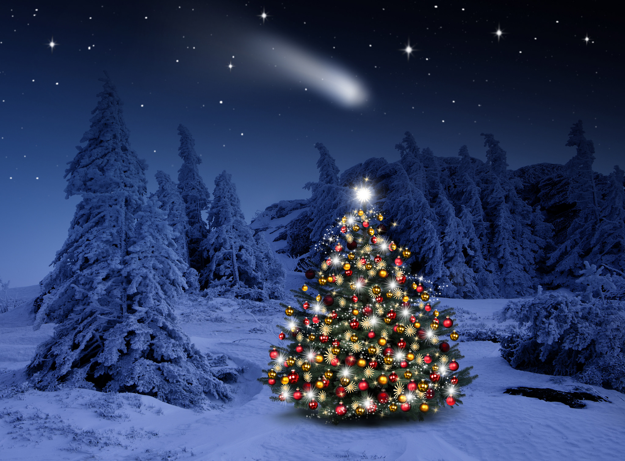 Lighted Christmas Tree In Winter Forest HD Wallpaper