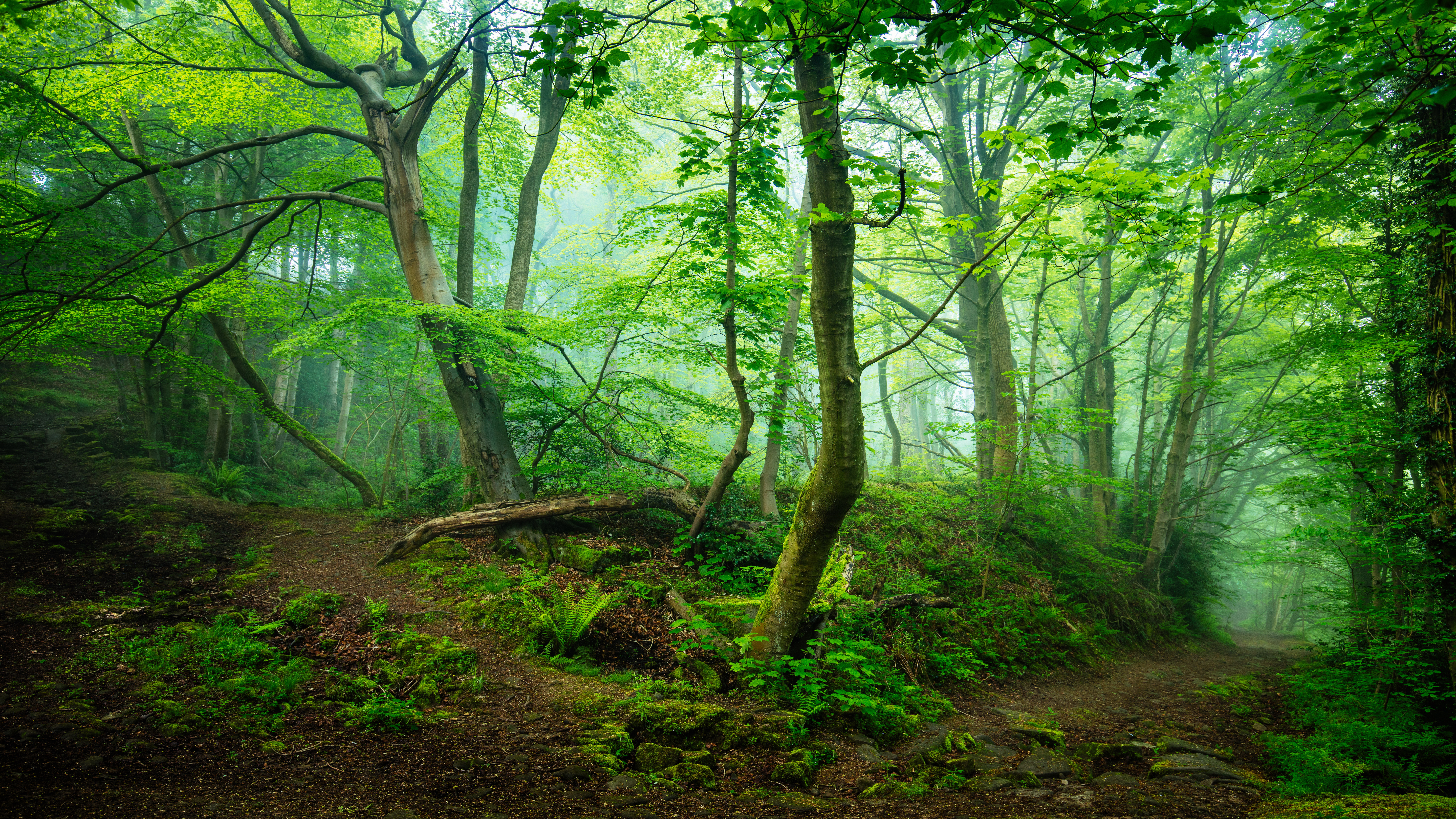 195 4k Ultra Hd Forest Wallpapers Background Images Wallpaper Abyss