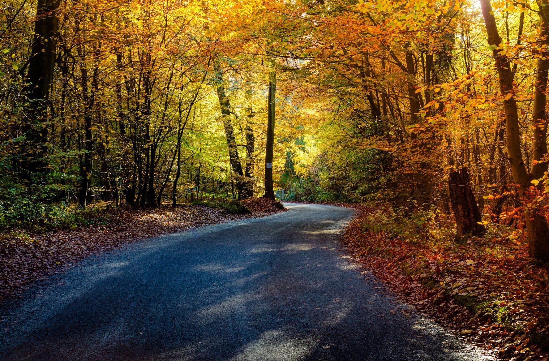 Man Made - Road  Nature Forest Fall Tree Foliage Wallpaper