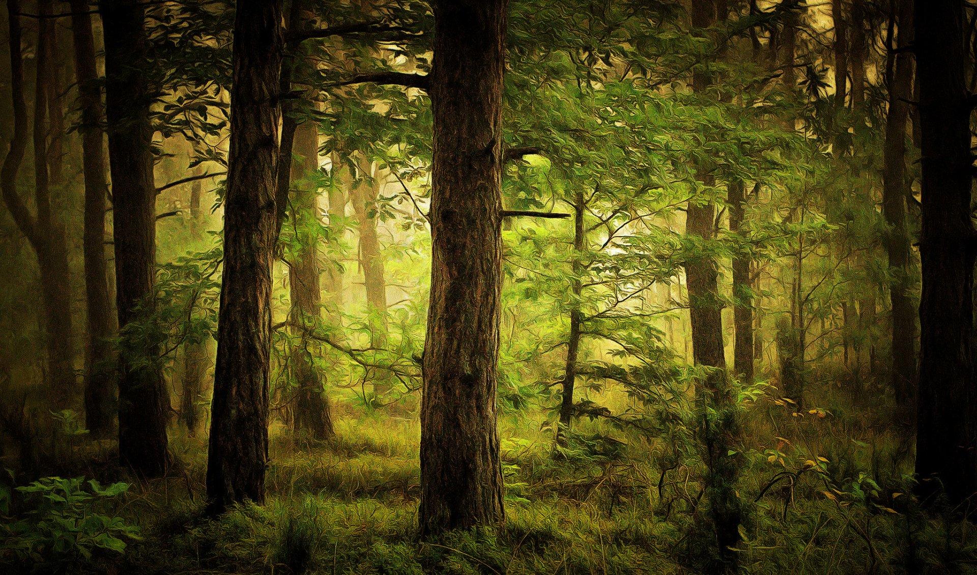 Artistique - Peinture  Arbre Forêt Artistique Vert Fond d'écran
