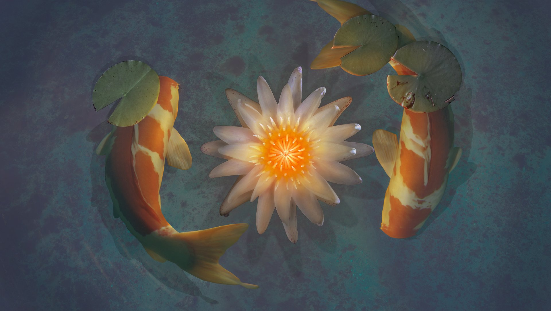 Koi full hd wallpaper and background image 2550x1440 for Koi fish wallpaper for walls