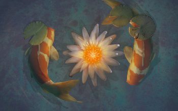 25 Koi Hd Wallpapers Background Images Wallpaper Abyss