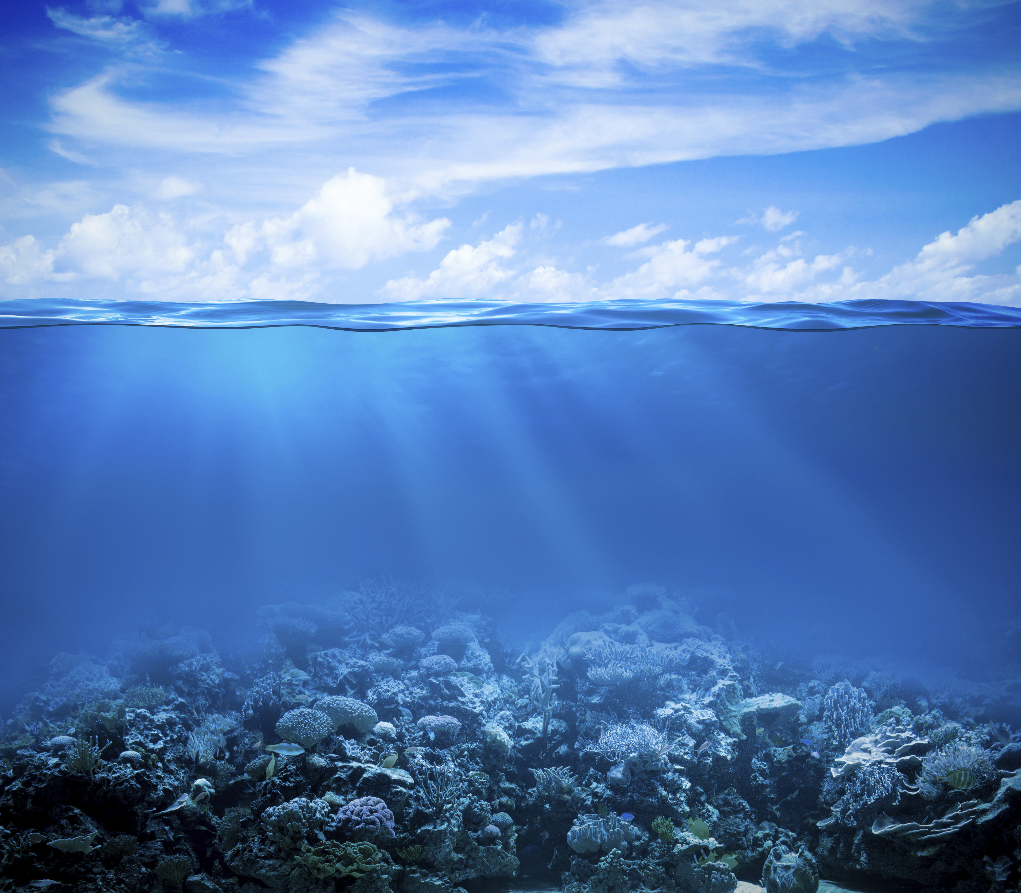 Coral Reef Under The Sea 4k Ultra HD Wallpaper