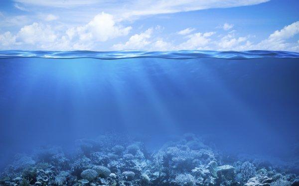 Animal Coral Coral Reef Sea Ocean Underwater HD Wallpaper   Background Image