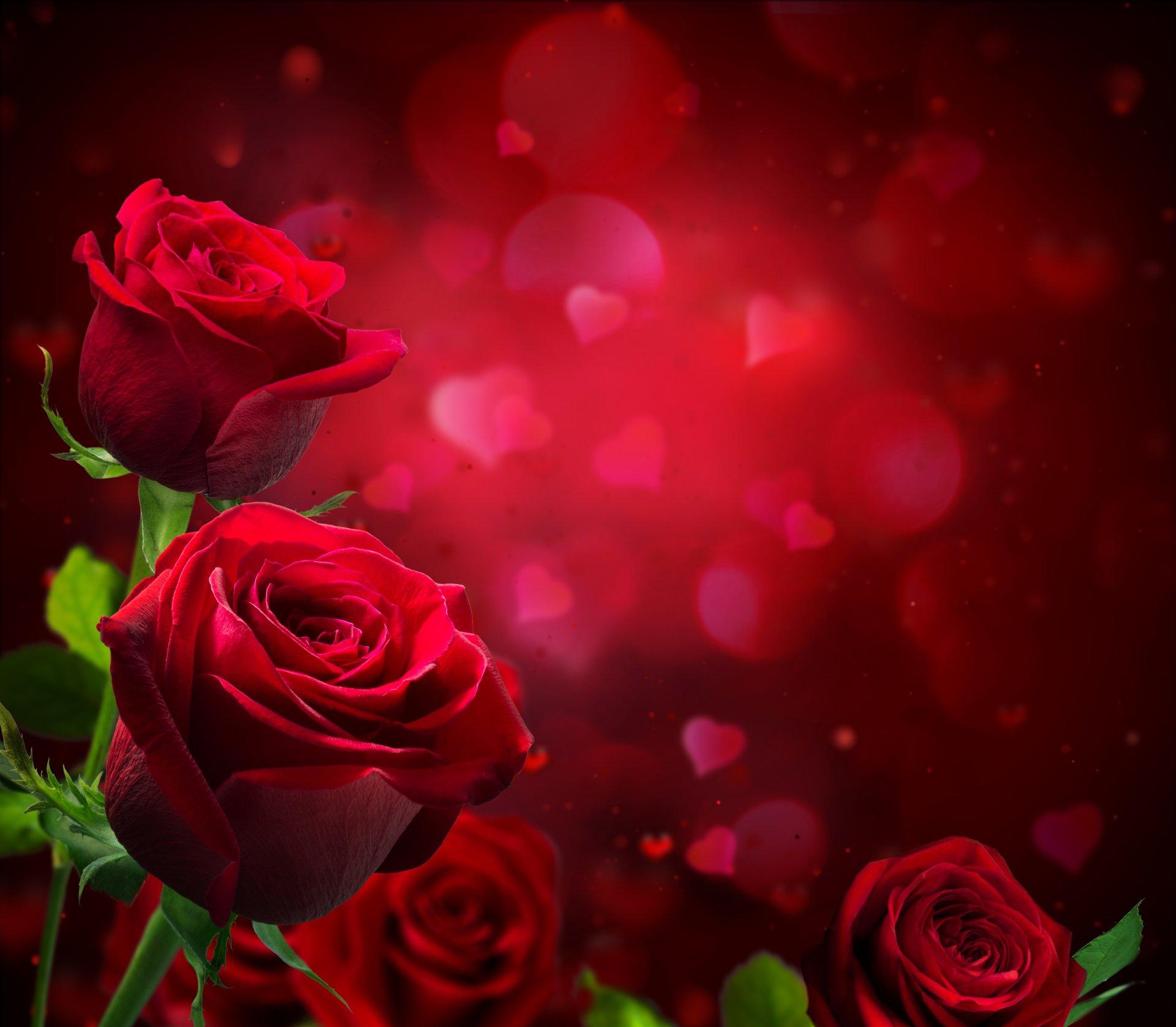 Rose 5k Retina Ultra HD Wallpaper