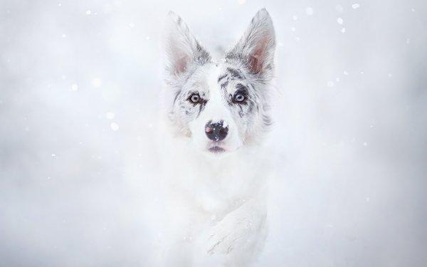 Animal Dog Dogs Muzzle White HD Wallpaper | Background Image