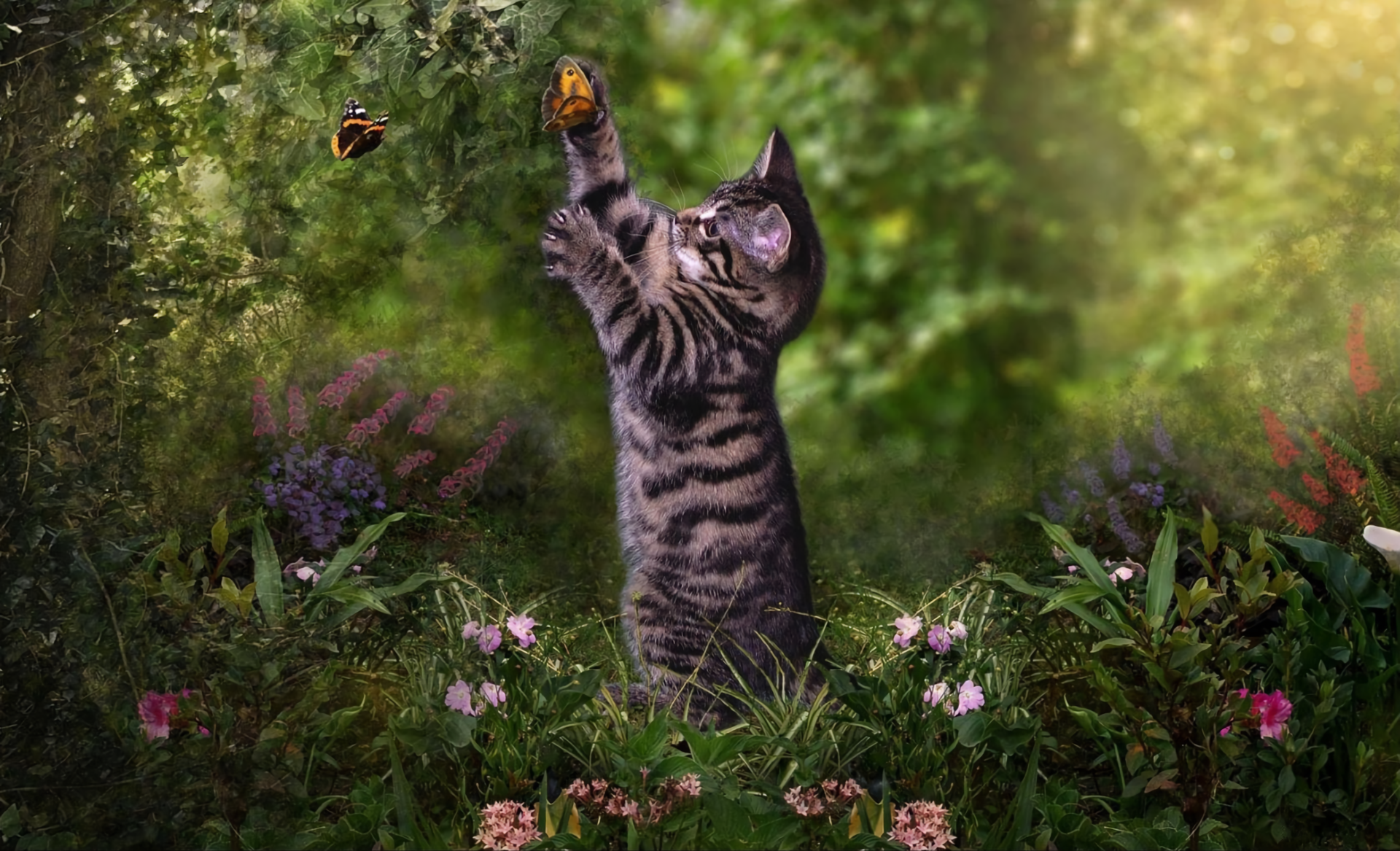 Kitten And Butterfly Hd Wallpaper Background Image 1920x1167