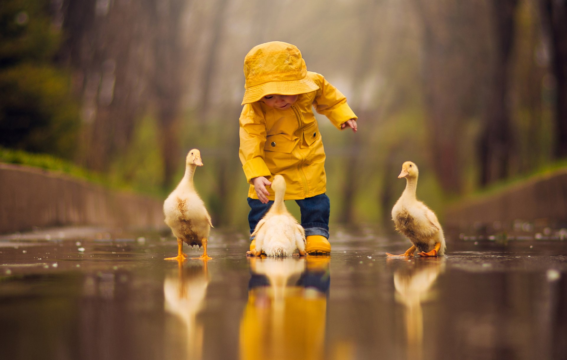 Photography - Child  Cute Bird Duck Reflection Depth Of Field Wallpaper