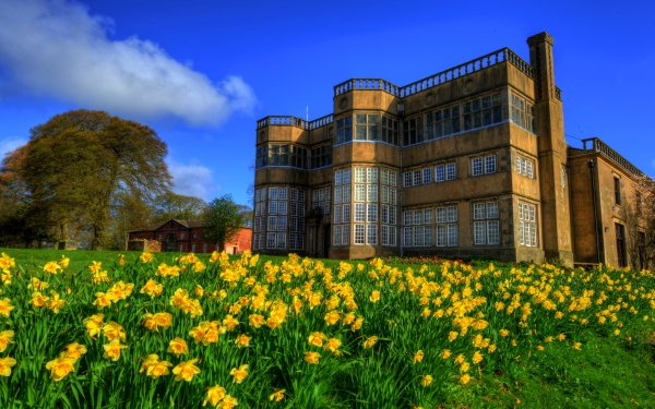 Man Made Palace Palaces Chorley Palace England Meadow Daffodil Yellow Flower HD Wallpaper | Background Image