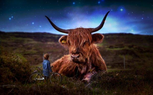 Photography Manipulation Photoshop Little Boy Bull Field HD Wallpaper | Background Image