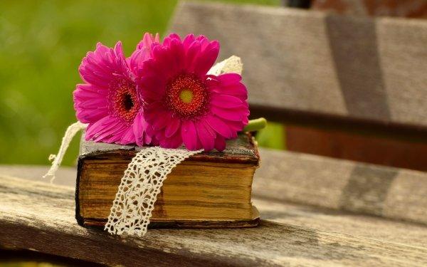Photographie Nature Morte Gerbera Livre Pink Flower Fleur Fond d'écran HD | Image