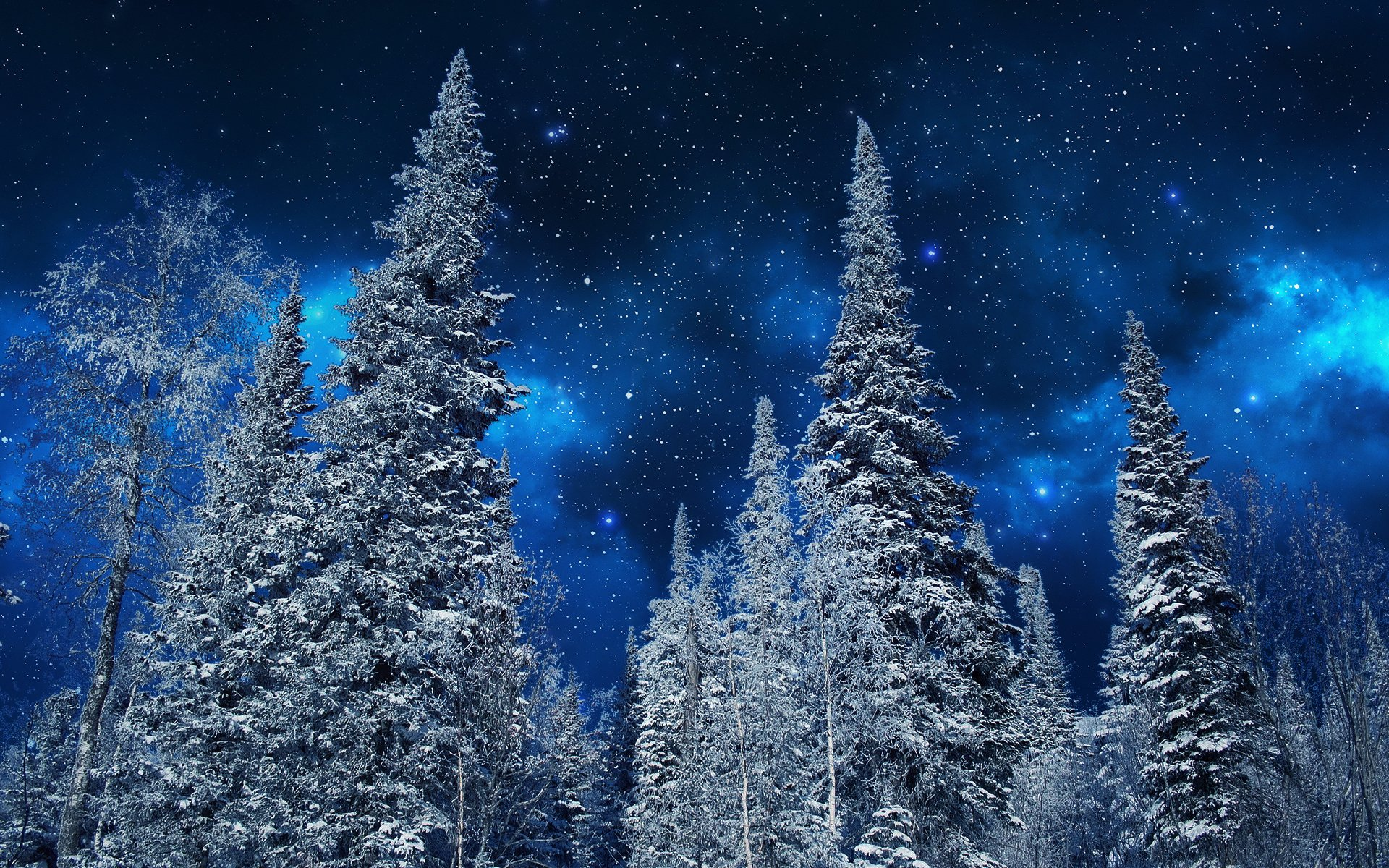 Earth - Winter  Tree Starry Sky Stars Sky Forest Snow Wallpaper