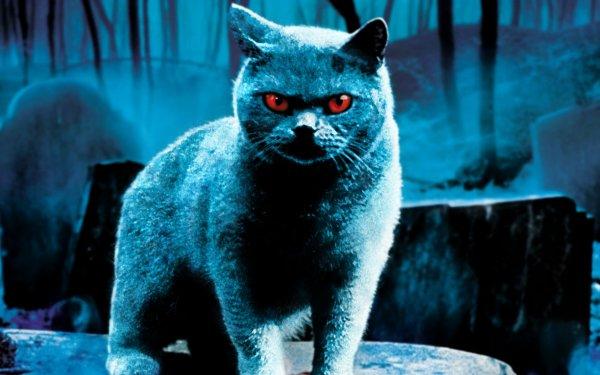 Movie Pet Sematary (1989) Cat HD Wallpaper | Background Image