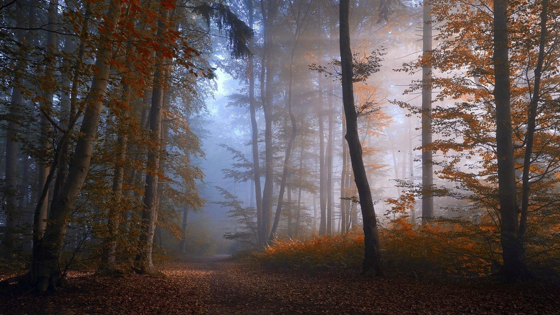 Обои misty, forest, Road. Природа foto 16
