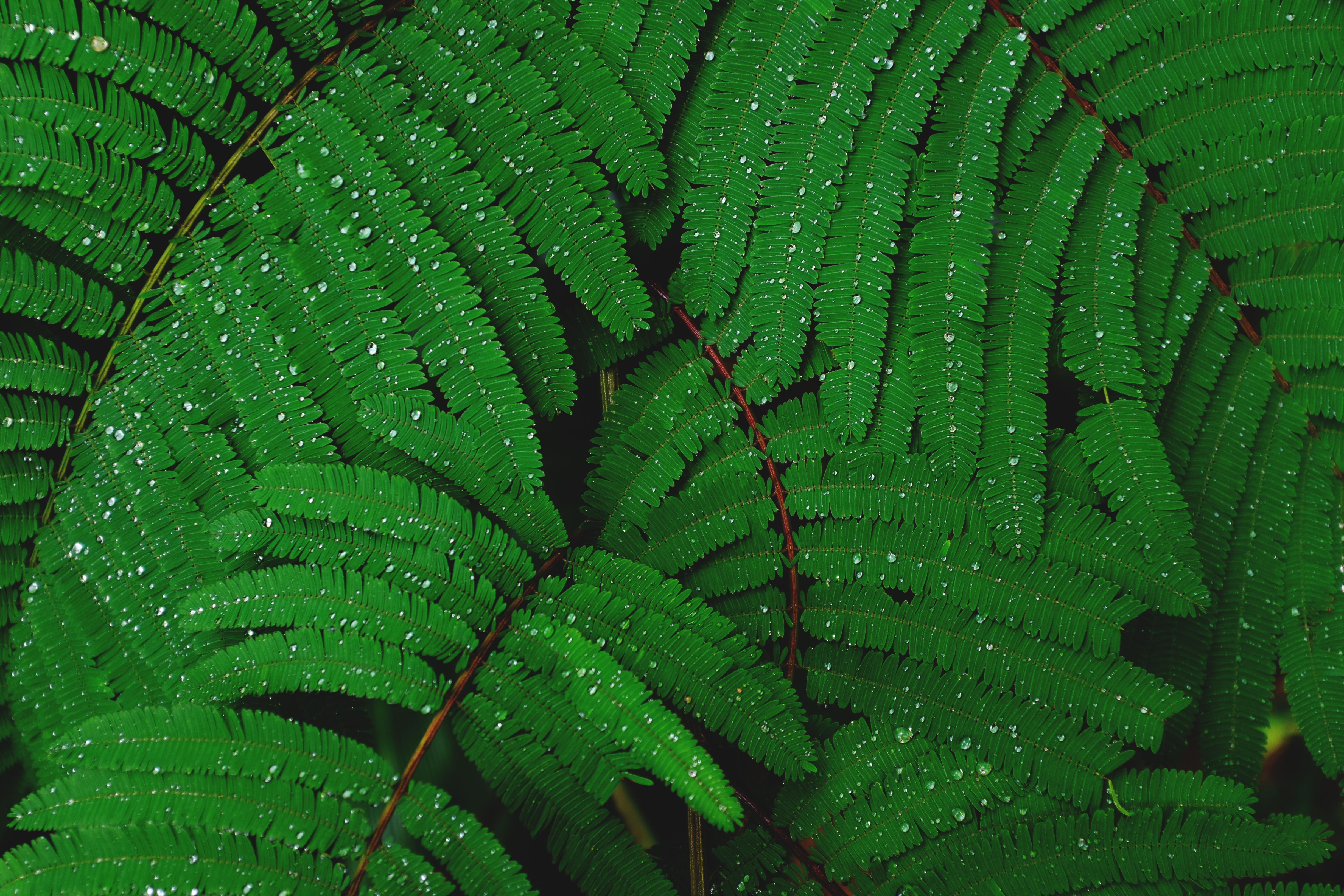 Fern 4k Ultra Hd Wallpaper Background Image 4896x3264
