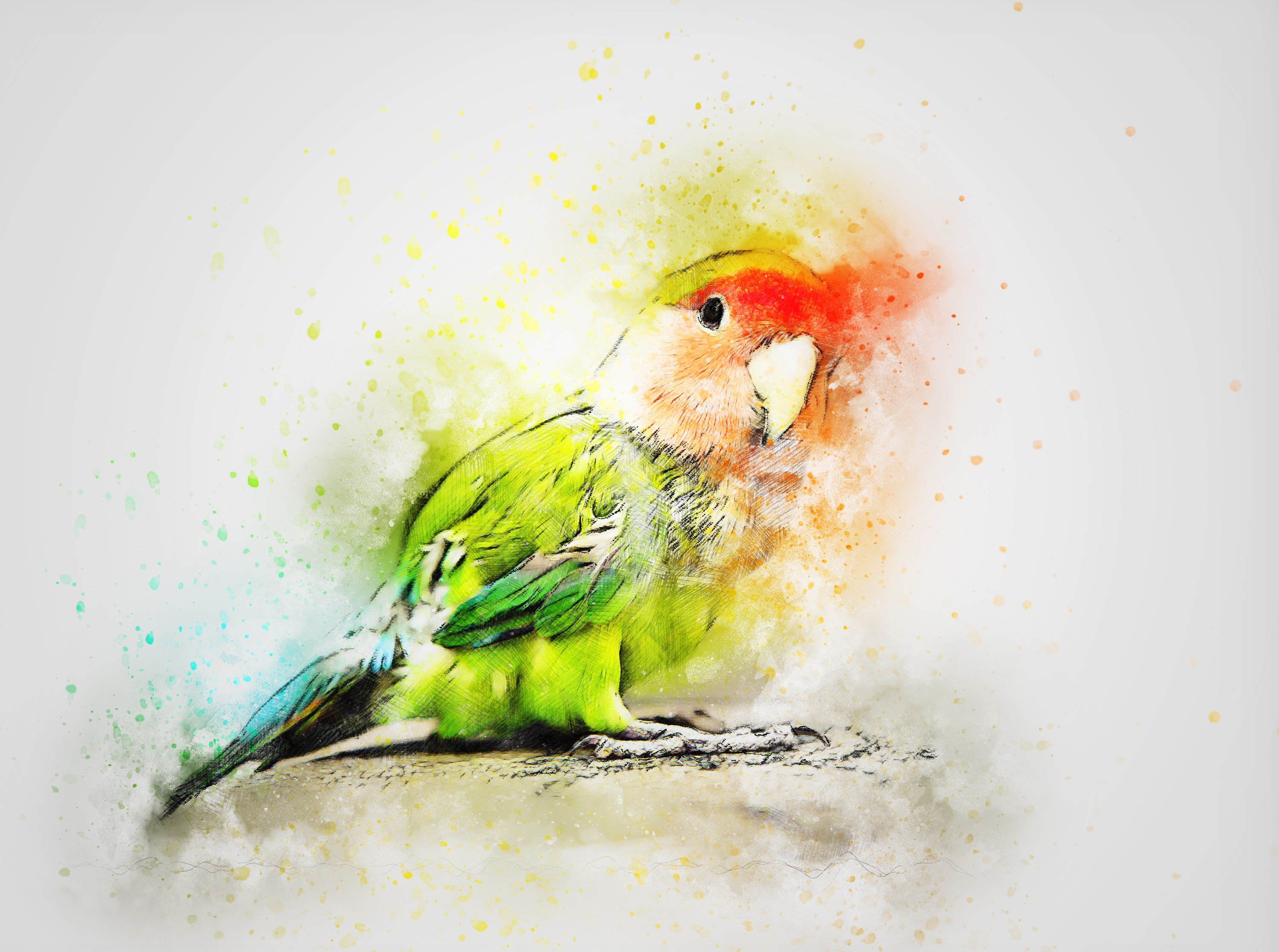 Parrot Art Full HD Wallpaper and Background Image | 3000x2234 | ID ...