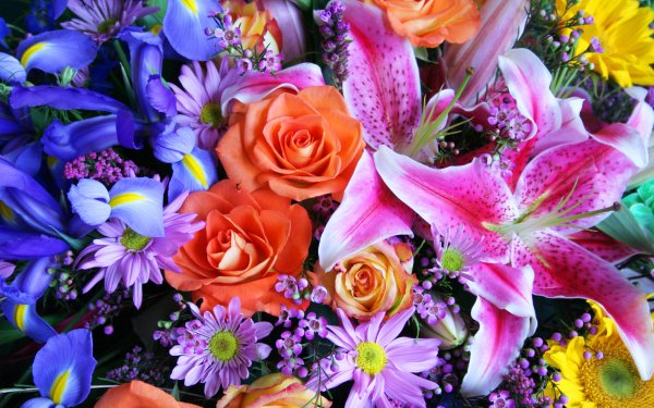 Earth Flower Flowers Colorful Spring Iris Rose Daisy Lily HD Wallpaper   Background Image