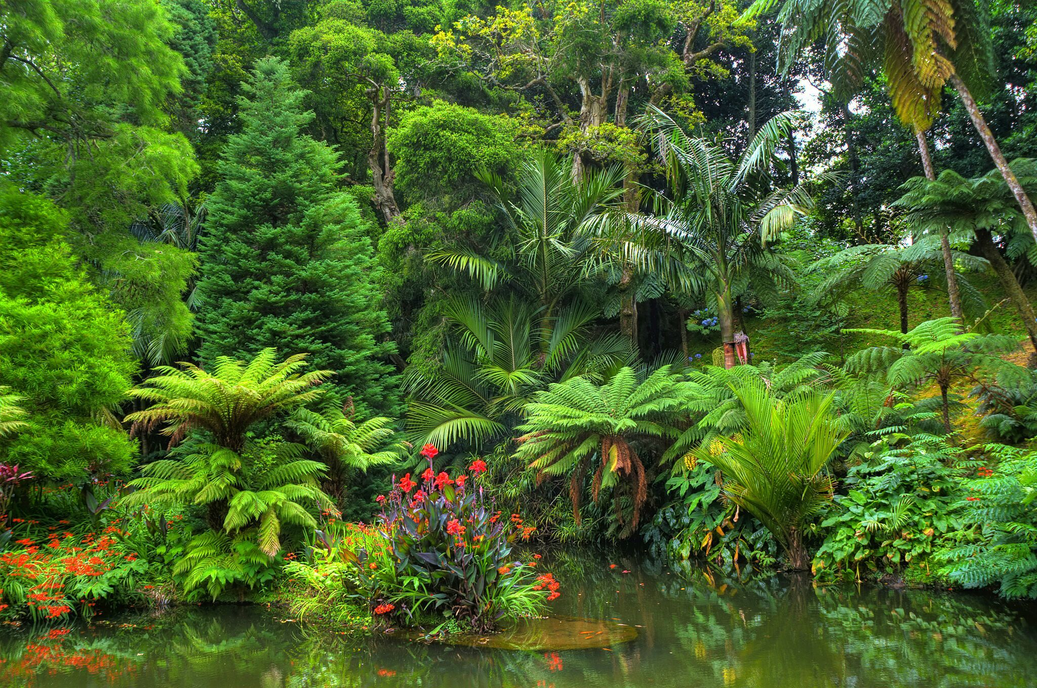 Pond In Tropical Forest Fondo De Pantalla Hd Fondo De