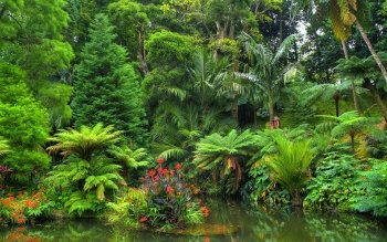 33 rainforest hd wallpapers background images wallpaper abyss