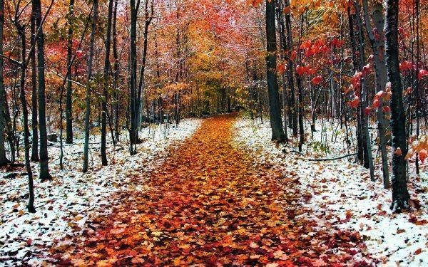 Earth Forest Fall Snow Frost Path HD Wallpaper | Background Image