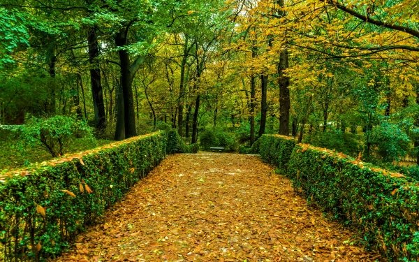 Photography Park Fall Tree Shrub Foliage Green HD Wallpaper | Background Image