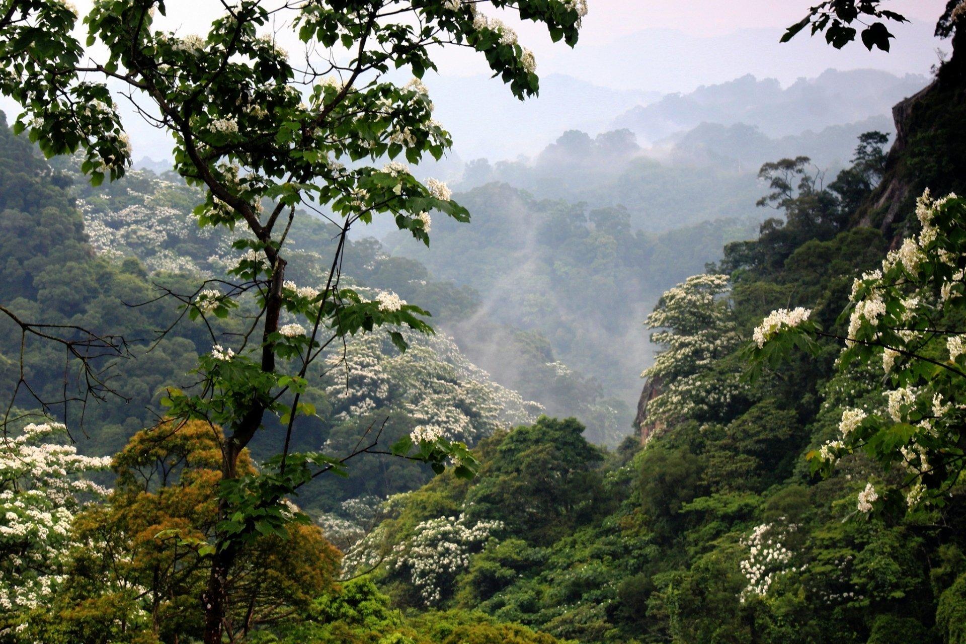 Earth - Forest  Nature Fog Vegetation Mountain Flower Wallpaper