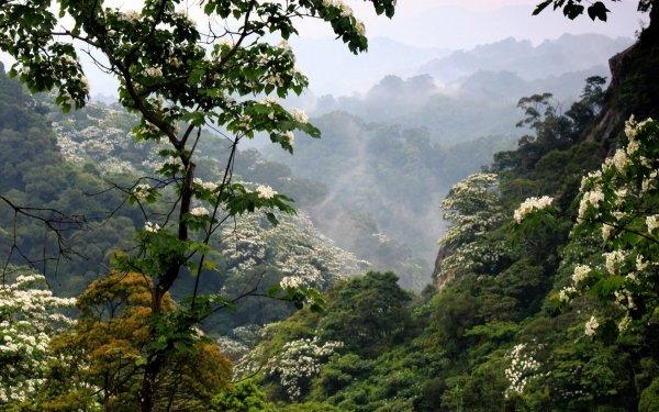Earth Forest Nature Fog Vegetation Mountain Flower HD Wallpaper   Background Image