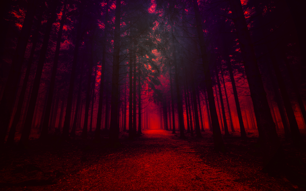Artistic Forest Wood Nature Red HD Wallpaper | Background Image