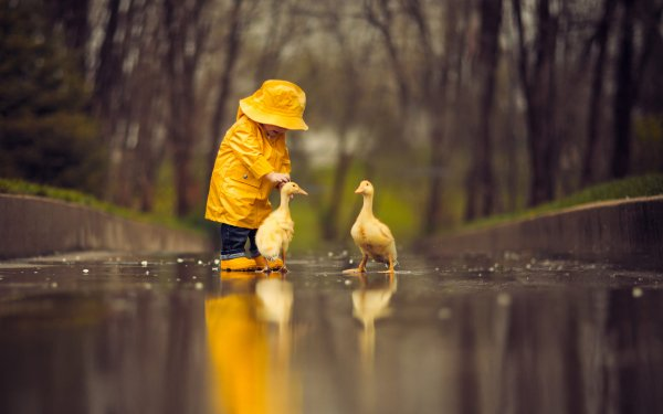 Photography Child Little Boy Raincoat Goose Cute Reflection HD Wallpaper | Background Image