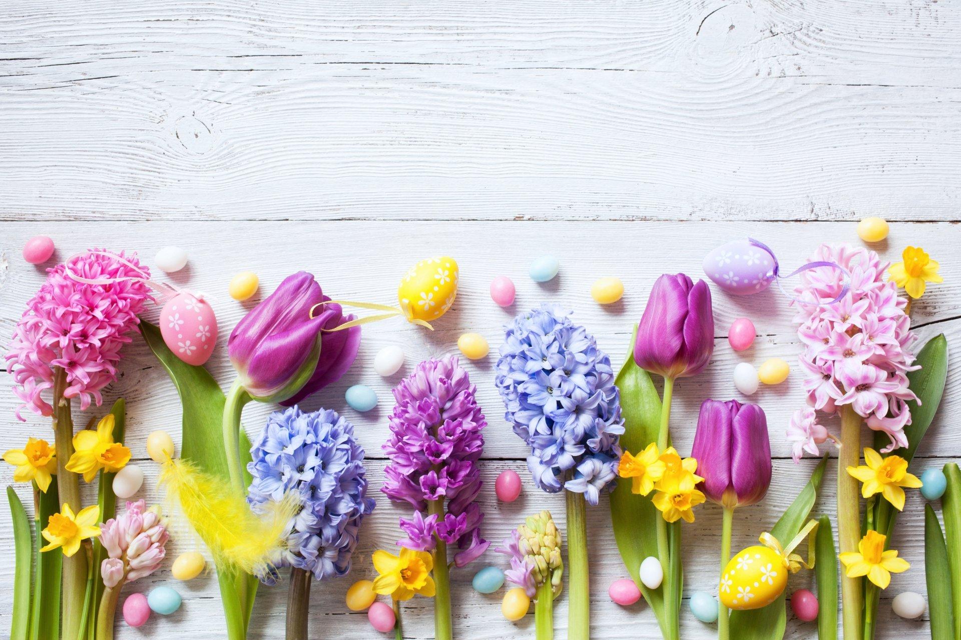 Man Made - Flower  Tulip Daffodil Pink Flower Yellow Flower Blue Flower Purple Flower Wallpaper