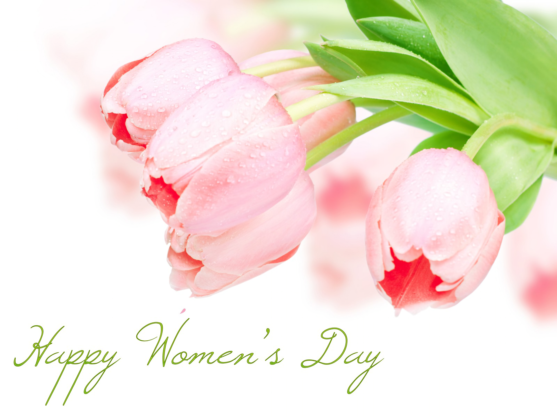 Feestdag - Women's Day  Tulp Bloem Statement Wallpaper