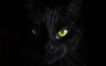 Fondos de pantalla celular gato negro
