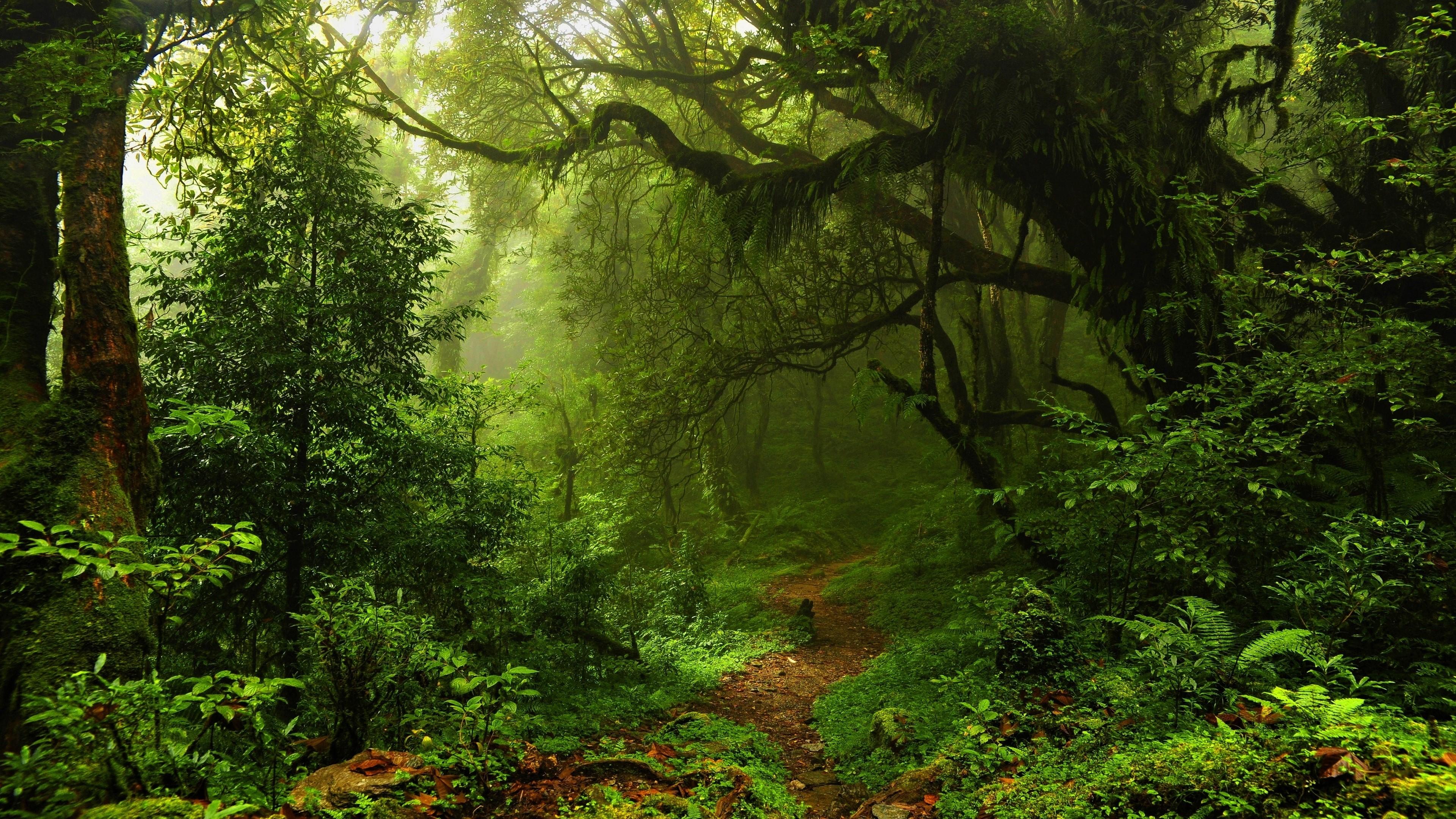 Sunlight In Green Forest 4k Ultra Hd Wallpaper Background