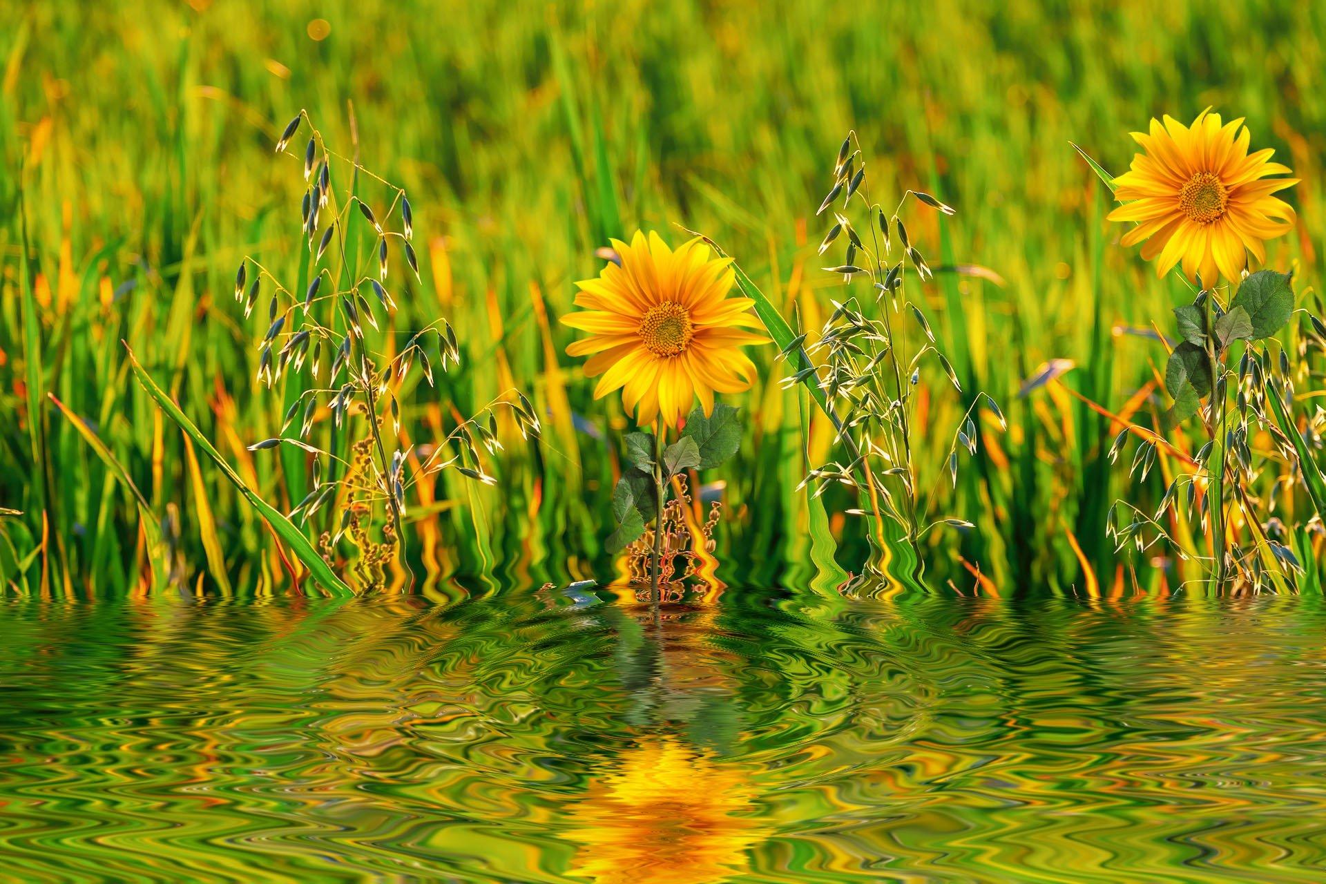 Flower Reflected In The Water Fondo De Pantalla Hd Fondo De