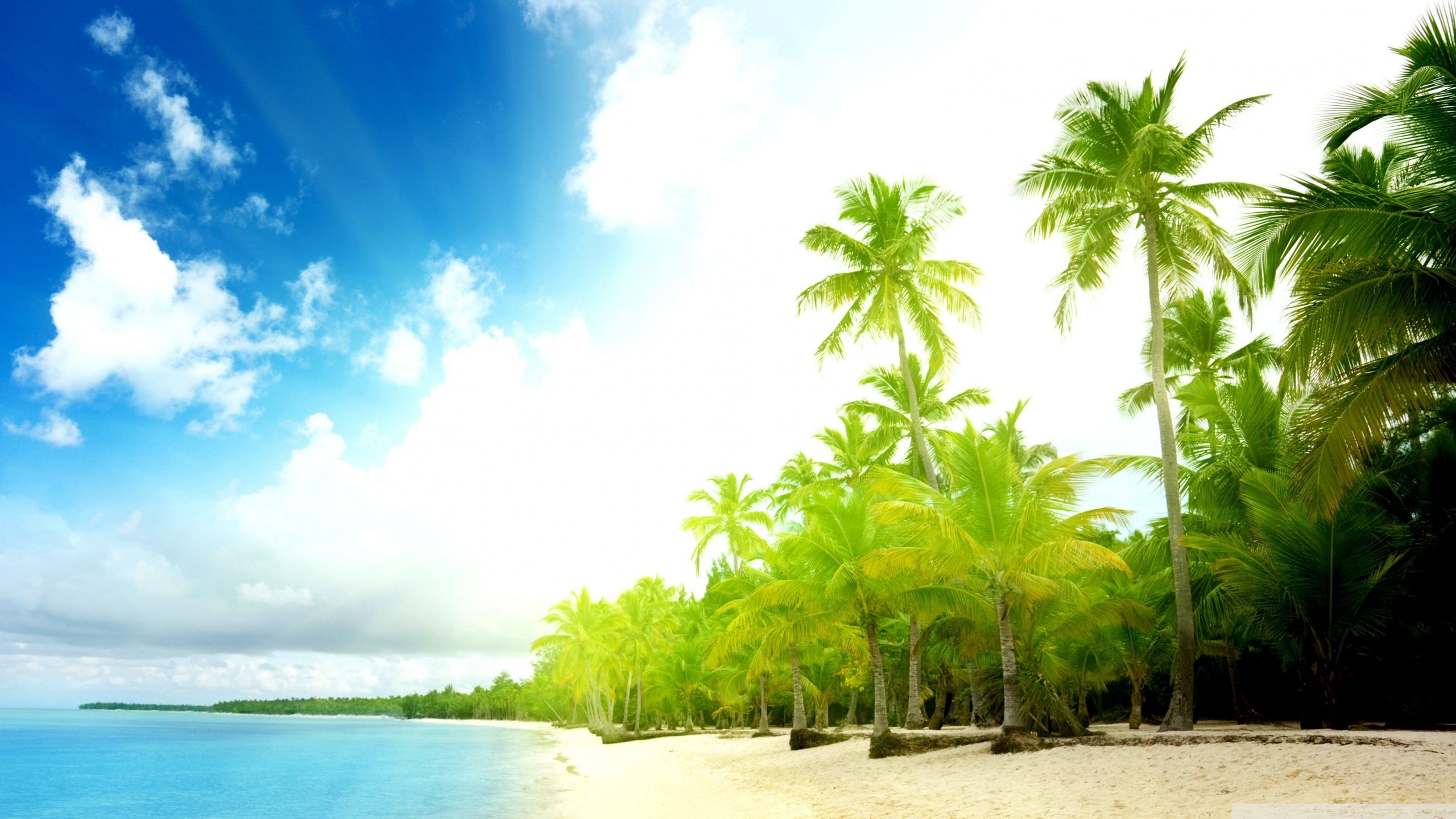 The Bright Beach Hd Wallpaper Background Image 2560x1440 Id 994529 Wallpaper Abyss