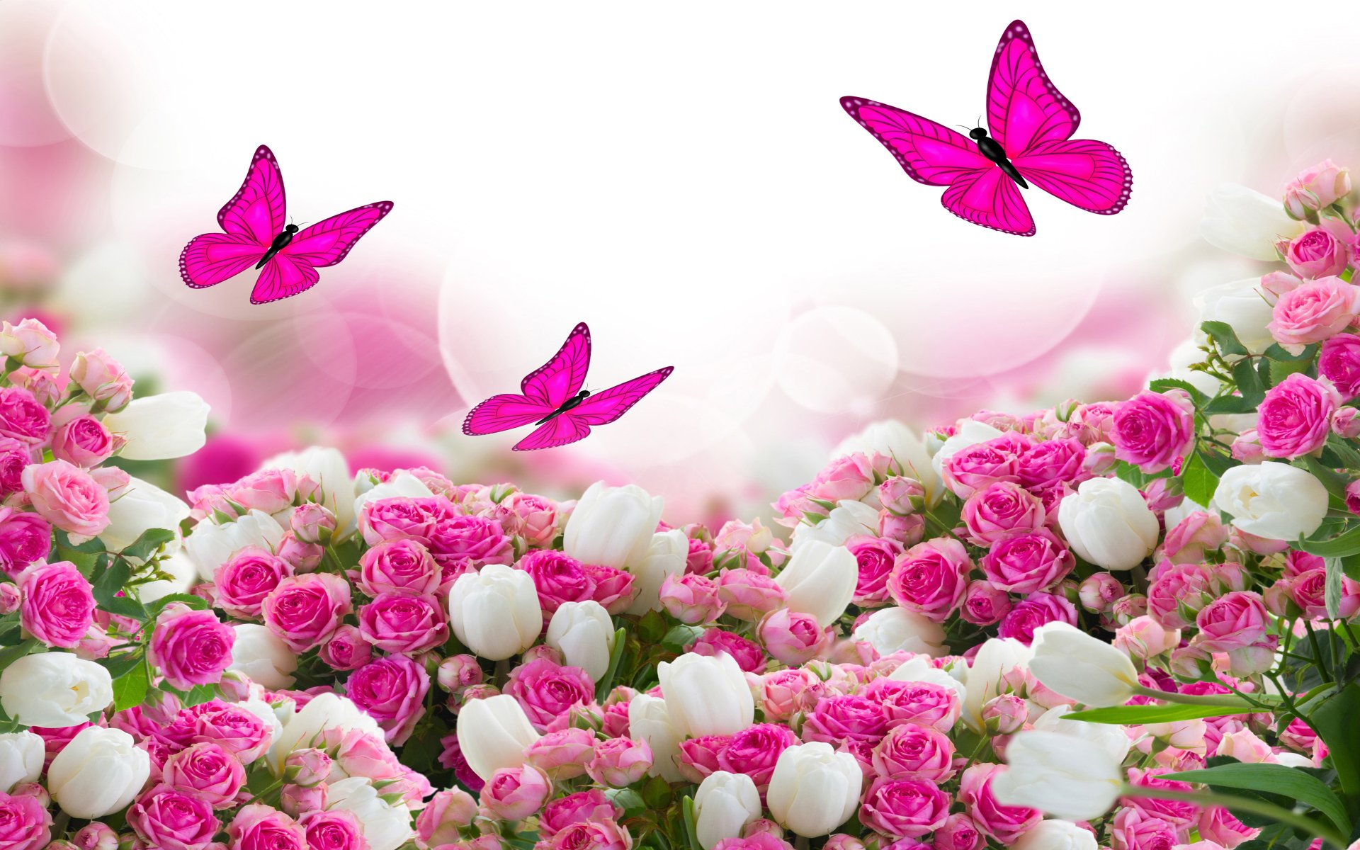Wallpapers ID:997737